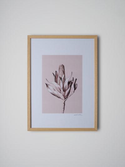 inflorescencia pino