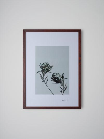 inflorescencia2 nogal