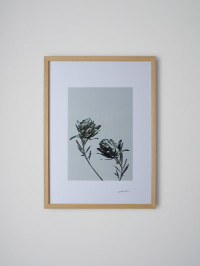inflorescencia2 pino