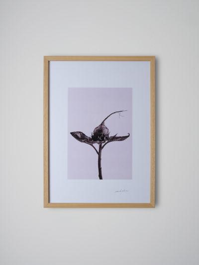 inflorescencia3 pino
