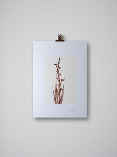 inflorescencia4 lamina