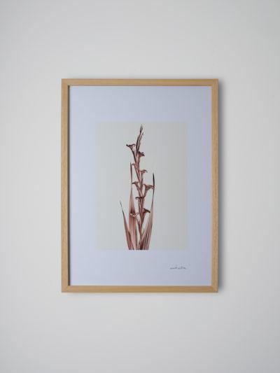 inflorescencia4 pino
